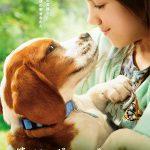 少女と犬が互いを想う眼差しに、幸せな涙の予感・・・!―『僕のワンダフル・ジャーニー』〈ポスター〉解禁