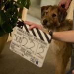 犬のモジョがキャスト陣にインタビュー!?ロビン・ウィリアムズ最後の出演となる特別映像公開!