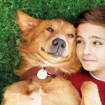 """""""この世に生きる目的を探している犬の物語""""―『僕のワンダフル・ライフ』""""ゴールデン・レトリバーのベイリーについて語る""""特別映像解禁"""