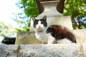 『猫なんかよんでもこない。』メイキング (5)