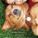 最愛の飼い主に会うために50年で3回生まれ変わった犬と人間の感動物語―『僕のワンダフル・ライフ』9月公開決定!