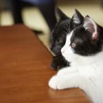 """人なつっこい""""チン""""と猫嫌いの""""クロ""""!?「猫なんかよんでもこない。」メイキング映像公開!"""