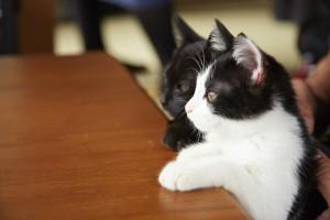 『猫なんかよんでもこない。』メイキング (1)