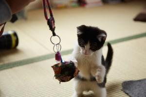『猫なんかよんでもこない。』メイキング (4)