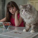 仕事一筋のゴーマン社長が突然ネコになっちゃった―『メン・イン・キャット』11月公開!