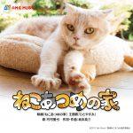 出演猫シナモンの堂々としたグラビアショットも併せて公開!―『ねこあつめの家』主題歌特別MV解禁