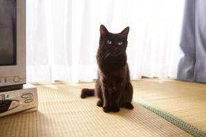 『猫なんかよんでもこない。』メイキング (3)