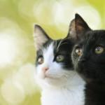 """猫は""""物心つく前から猫は大切な家族""""中川翔子らが猫愛あふれるコメント!"""